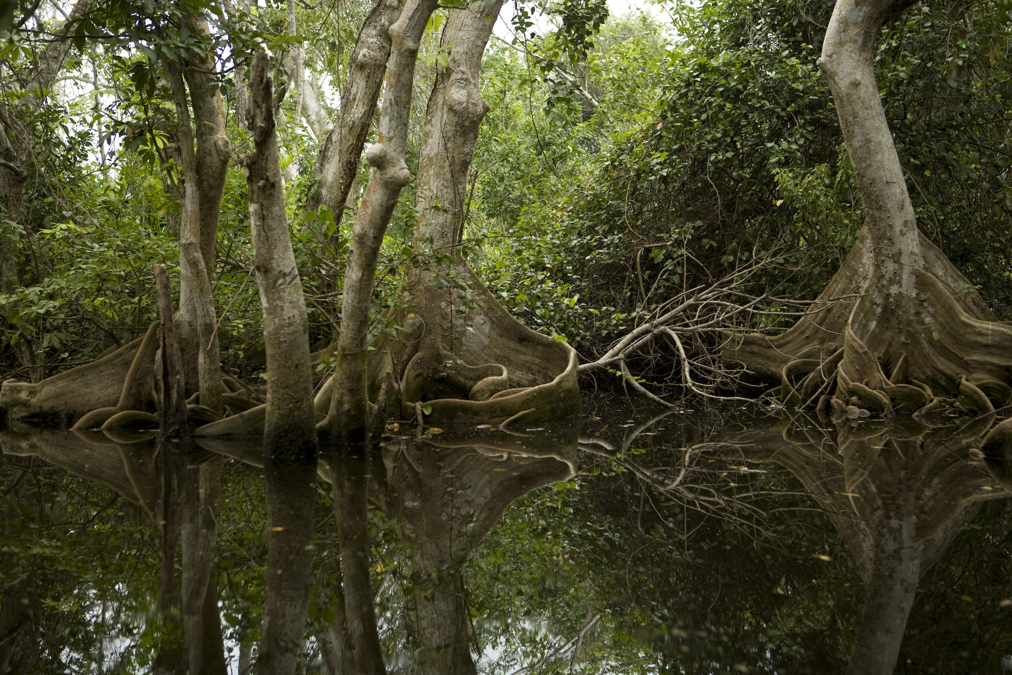 1_05_01_selva-inundable_loc-cienaga-del-fuerte_gerardo-sanchez-vigil